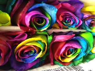 ROSE RAINBOW TINTED