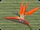 Birds 80