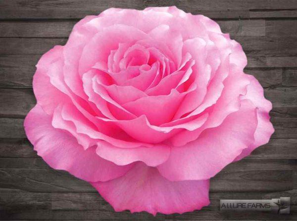 Pink Mayras