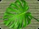 Greens 80
