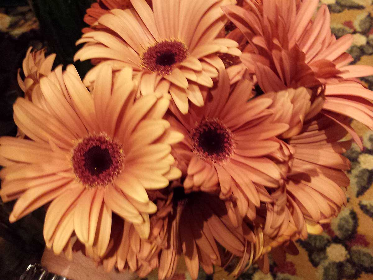 """The fifth most used cut flower in the world"""" – Allure Farms"""