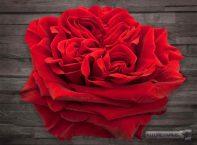 Red Mayras