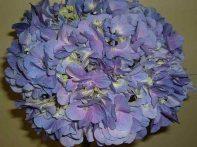 Elite Lavender Hydrangea