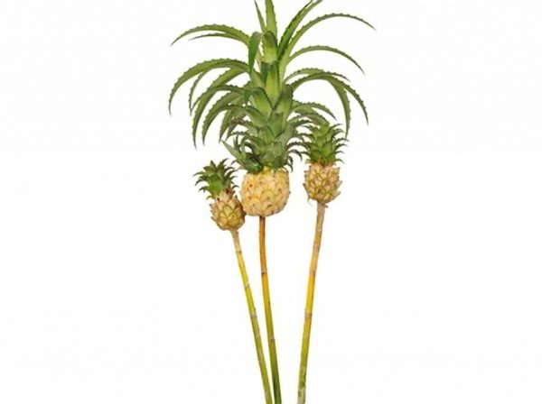 Pineapple – Mini White