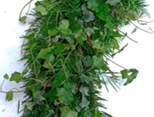 Ivy Lace