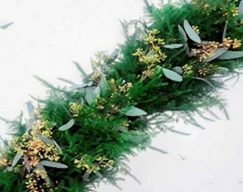 Plumosa & Seeded Euc Garland